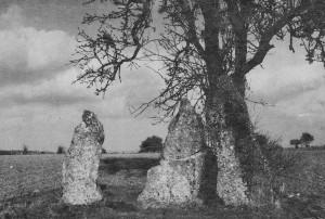 Les trois menhirs d'Oppagne, au sud de l'alignement de Wéris